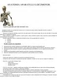 Imagine document Anatomia Aparatului Locomotor