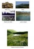 Imagine document Animale pe cale de disparitie