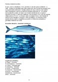 Imagine document Specii de pesti