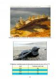 Imagine document Studiu de caz privind schimbarile ecologice provocate de navigatie si transporturi navale