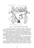 Fiziologia Sistemului Nervos