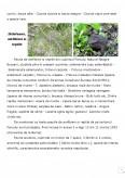 Rezervatia Naturala Neagra-Bucsani