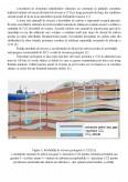 Captarea si Stocarea Emisiilor de CO2 - Oxicombustia
