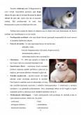 Diabetul zaharat la pisica